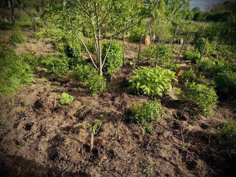 Jardin en permaculture , culture étagée, jardin forêt...