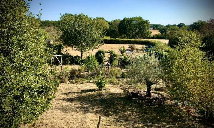jardin & perma & sécheresse 2019...